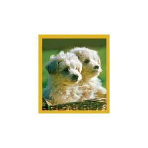 New Magnetic Bookmark Poodle Puppies High Quality Modern