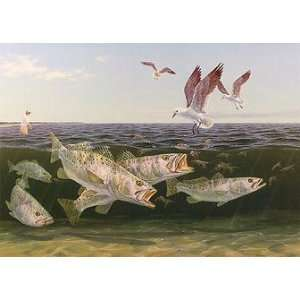 Frenzy   Speckled Trout, Seagulls and Shrimp saltwater