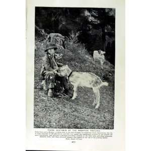 c1920 GOATS SWITZERLAND MOUNTAIN BOY ALPINE SHEPHERD: Home