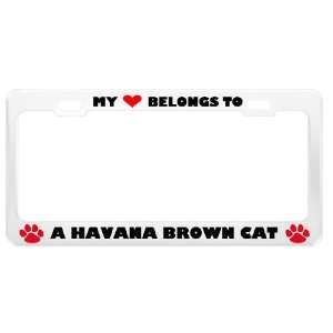 A Havana Brown Cat Pet White Metal License Plate Frame Tag
