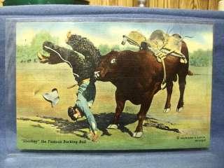 Vintage Postcard Sharkey  Famous Bucking Bull