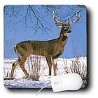 3dRose LLC Wild animals   White Tailed Deer   Mouse Pads