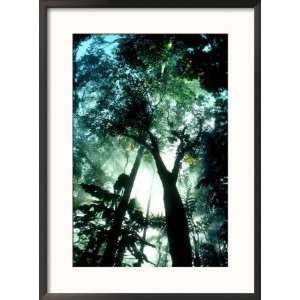 Cloud Forest, Rancho Grande, Venezuela Framed Photographic