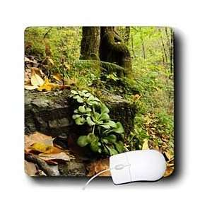 ) in deciduous forest. Galicia, Spain.   Mouse Pads: Electronics