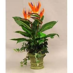 Bird of Paradise in 7 Decorative Pot   Orange Purple Color