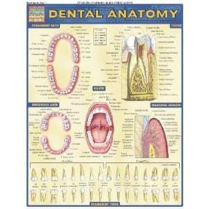 Dental Anatomy [CHART QUICKSTUDY DENTAL ANA]: Books