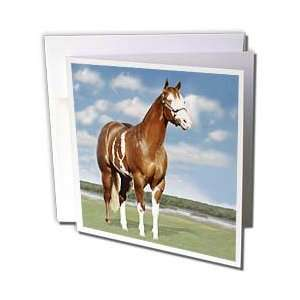 Horse   Champion Paint Quarter Horse   Greeting Cards 12